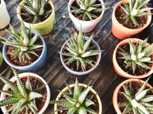 9 Easy Indoor Plants You Can Buy Online